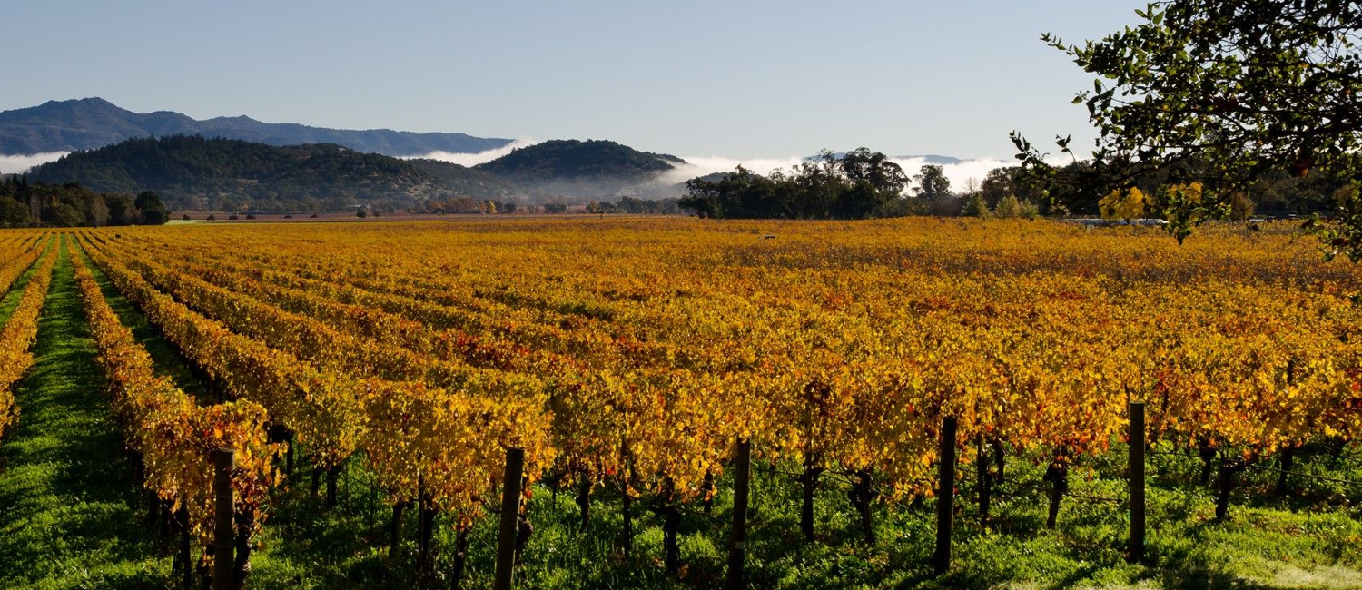 MAKE THE MOST OF YOUR NAPA VALLEY ADVENTURE